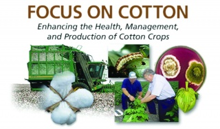FocusOnCotton